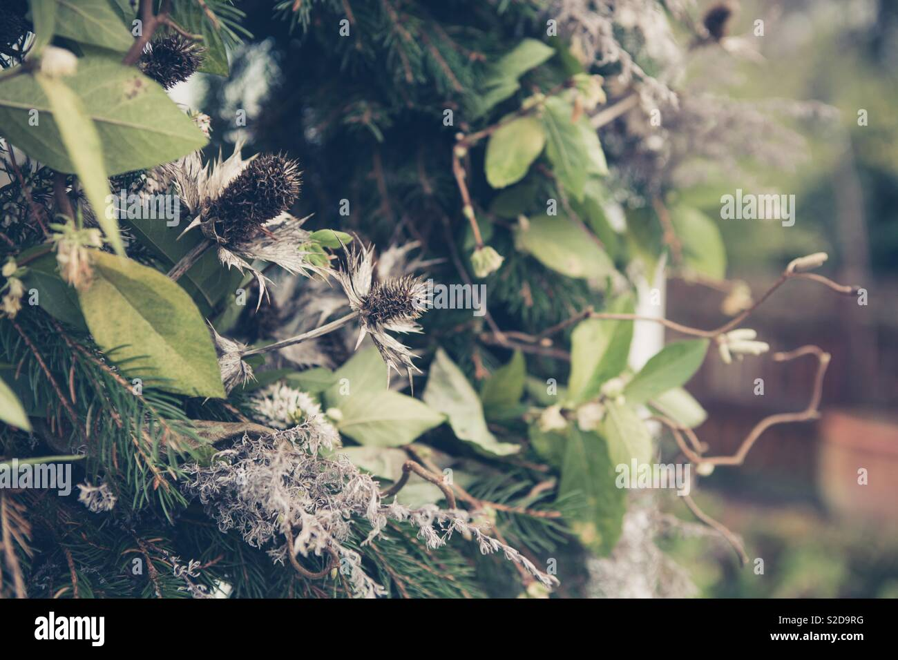Close up of natural English country garden Christmas wreath. Festive wreath with neutral colours, dried flowers, fir tree and thistles - Stock Image