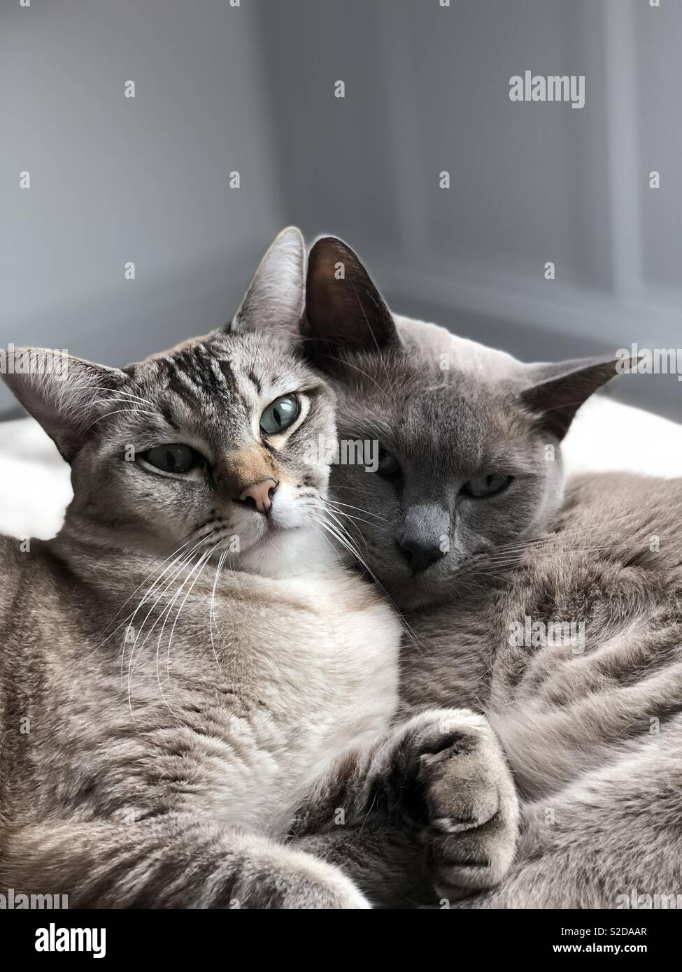 Cat Brotherly Love - Stock Image