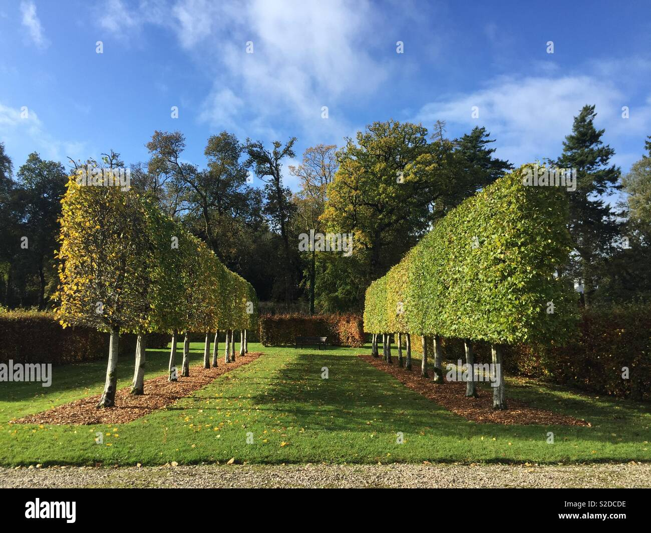 Autumn Topiary beech hedges in formal garden - Mount Stuart, Isle of Bute, Scotland - Stock Image