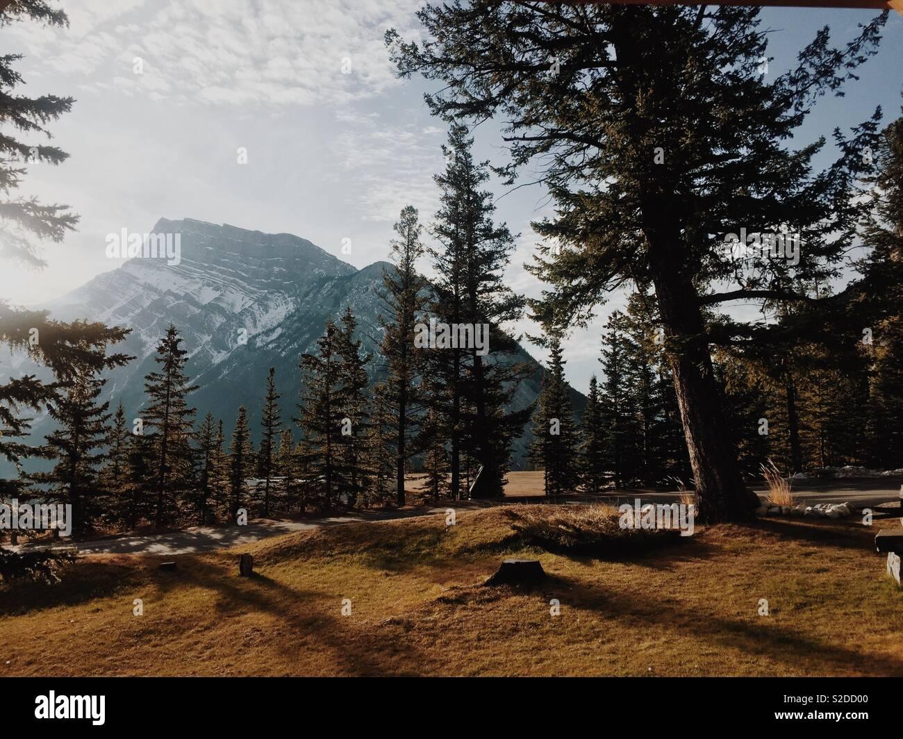 View of mountain through the trees, Banff - Stock Image
