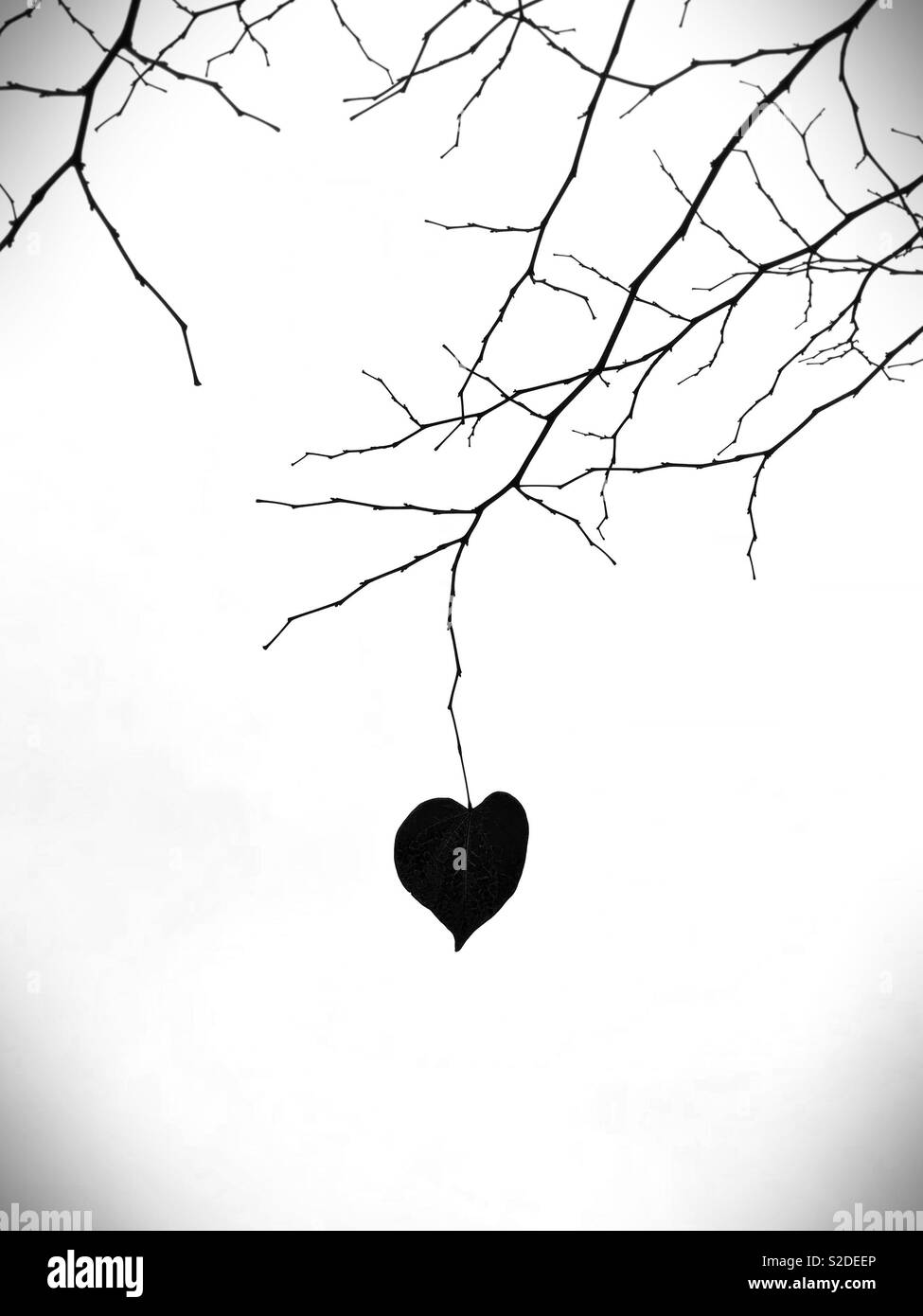A solitary heart-shaped leaf on a bare branch. - Stock Image