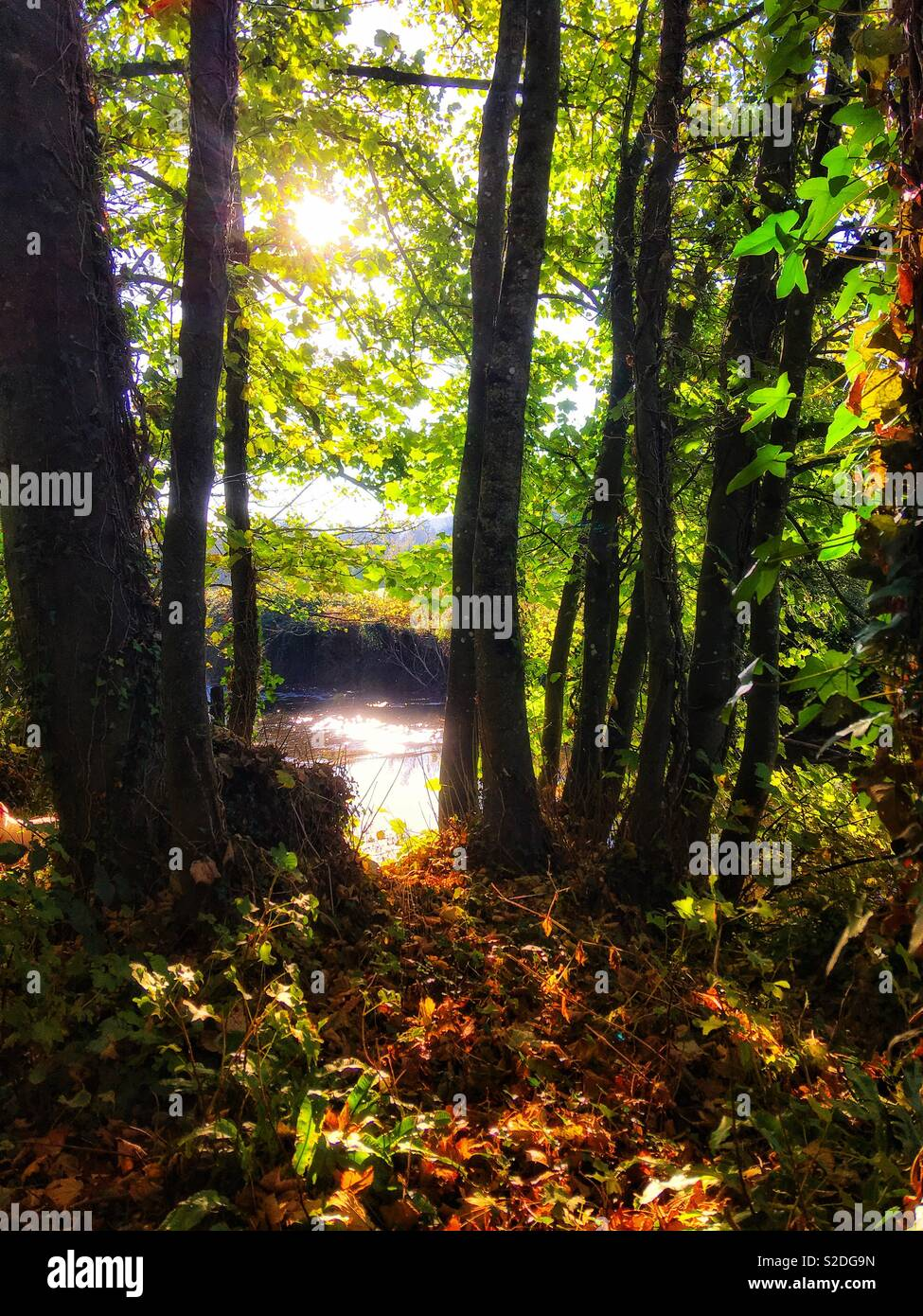 Soft focus image looking through Autumn trees to a sparkling river - Stock Image