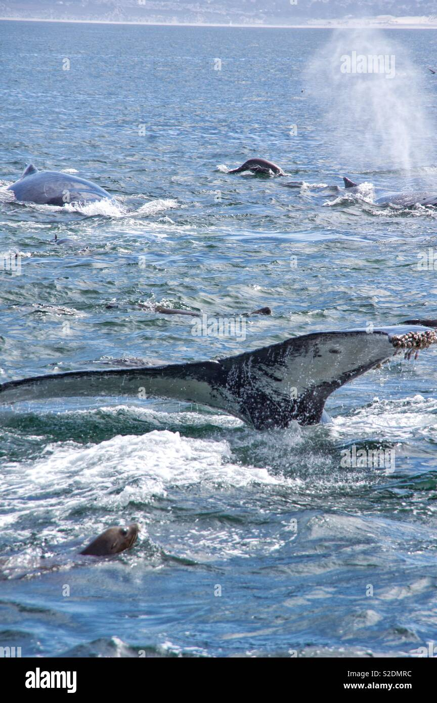 Humpback Whale Tail - Stock Image
