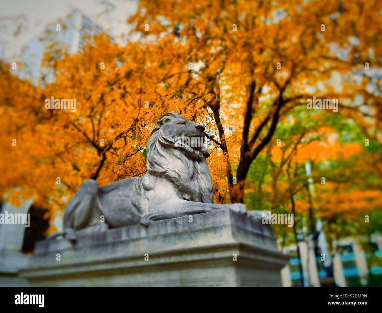 Fortitude the library lion statue at the main public library on Fifth Avenue on a bright autumn day, NYC, USAA Stock Photo