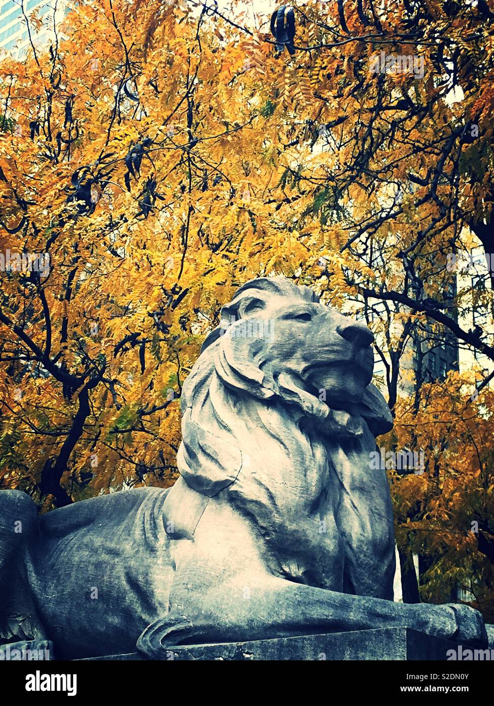 Fortitude the library lion in front of bright yellow autumn foliage, Fifth Avenue, NYC, USA Stock Photo