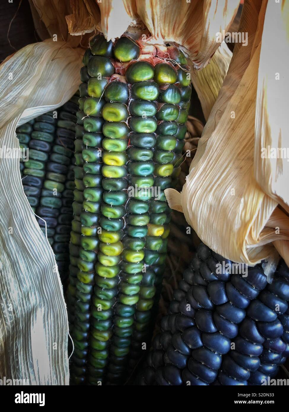 Indian corn at a market in Oakland, California. Stock Photo