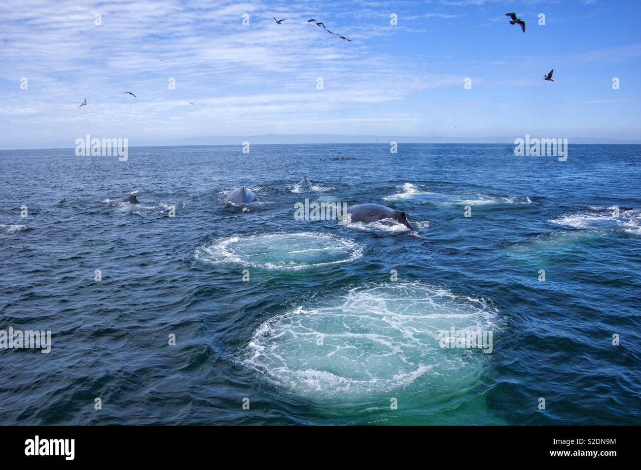 Humpback Whale Hunting - Stock Image