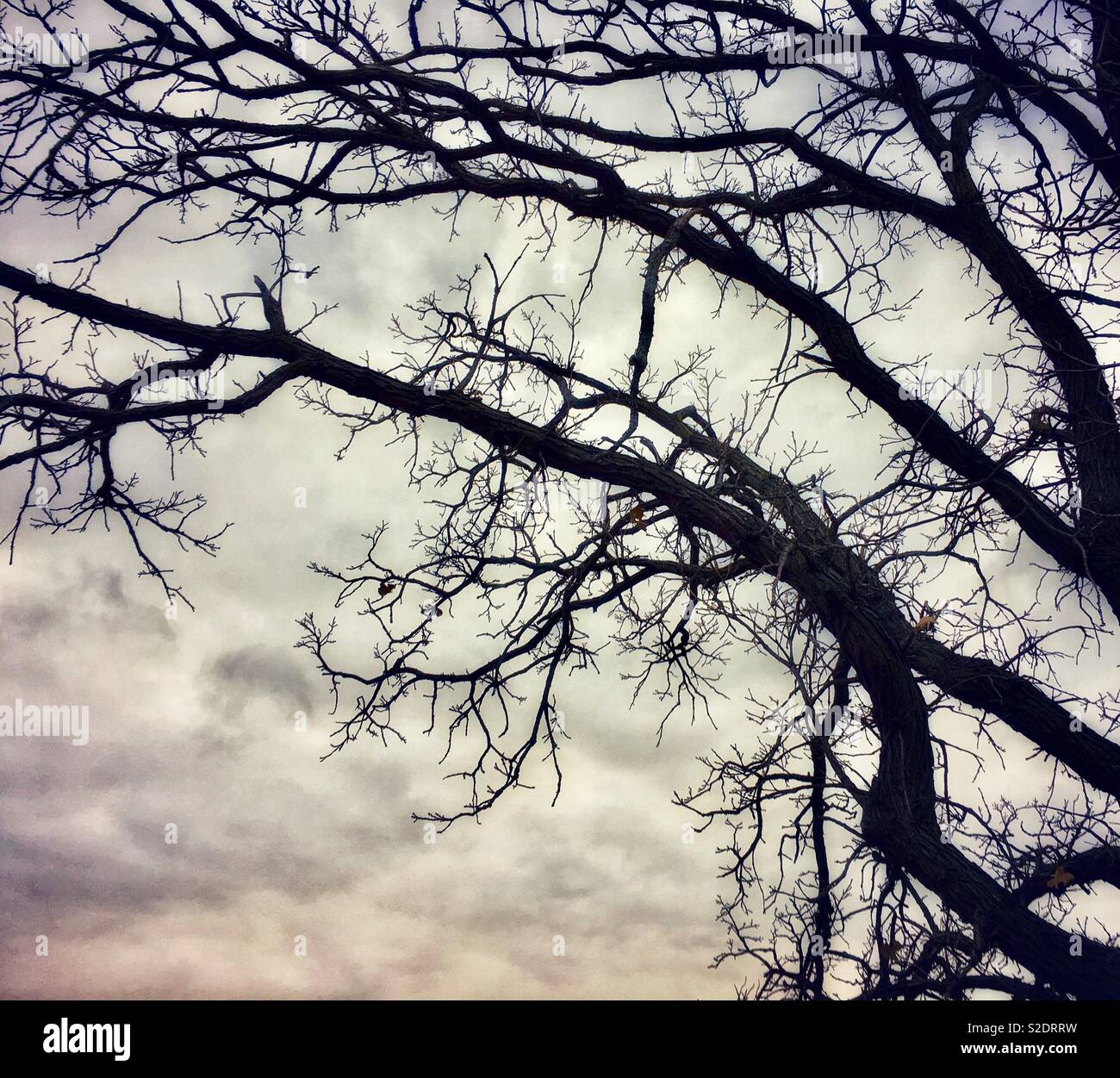 Creepy dark trees against Cloudy sky - Stock Image