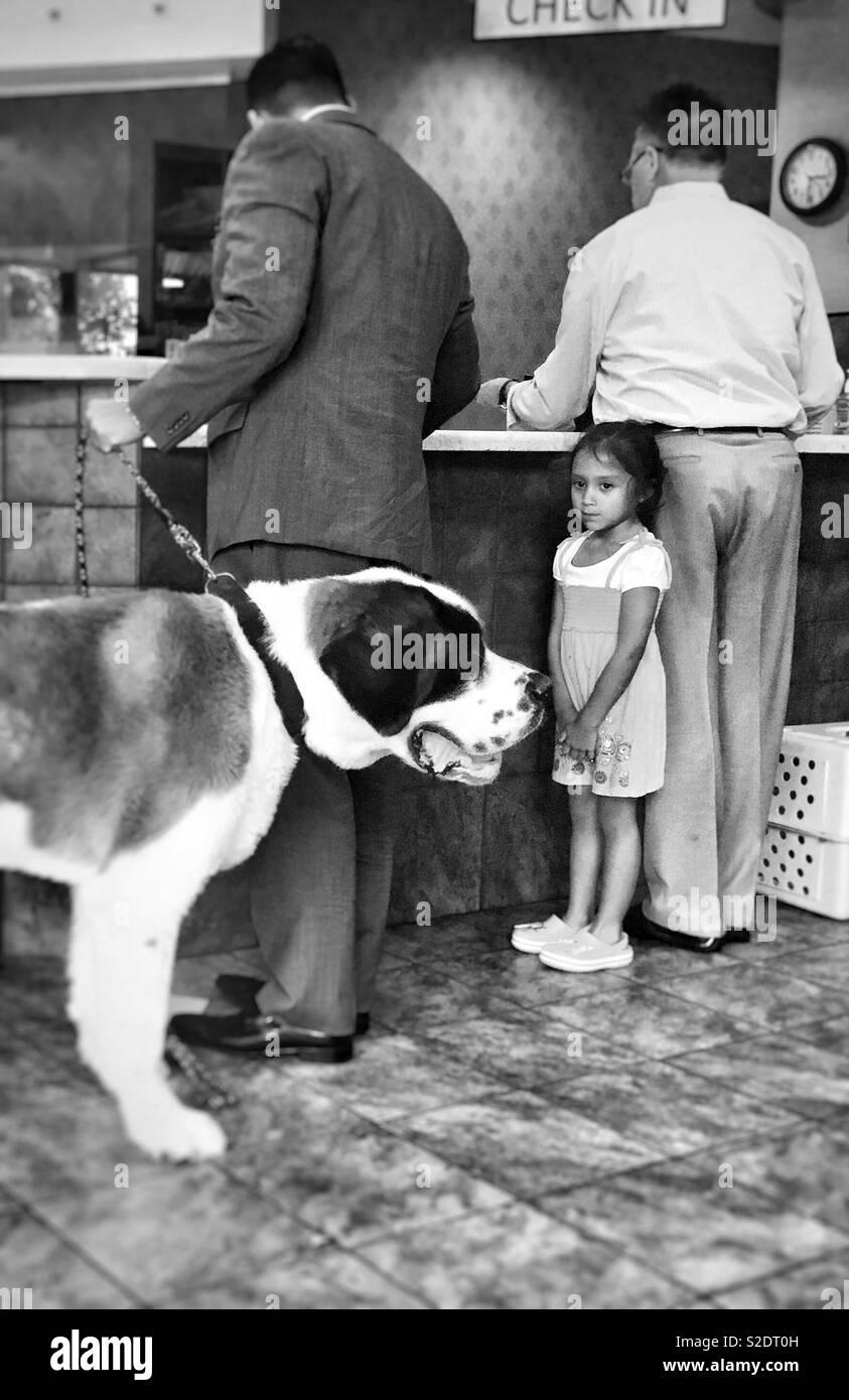 Little girl vs big dog in stare down. - Stock Image