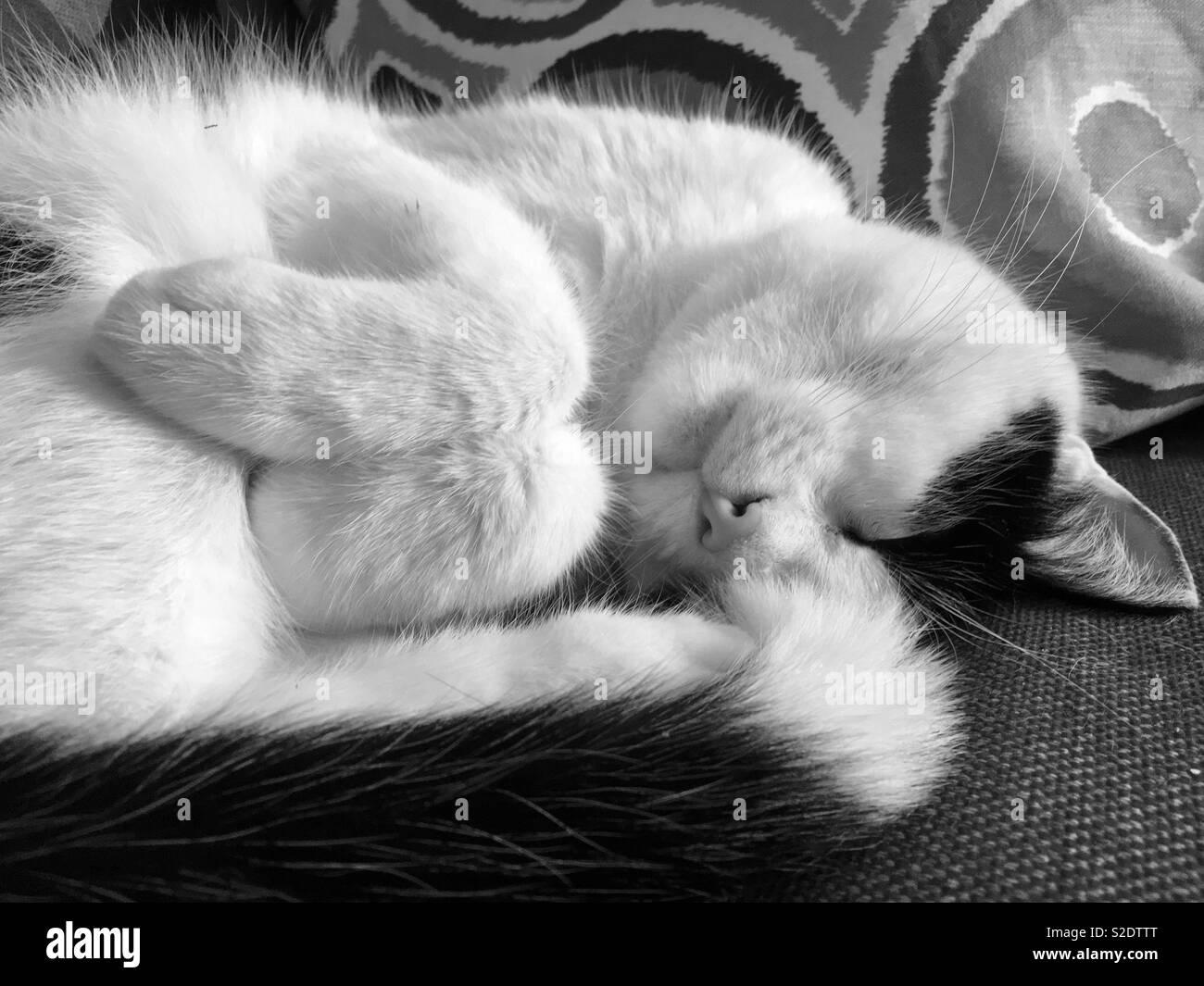 Cute sleeping cat - Stock Image
