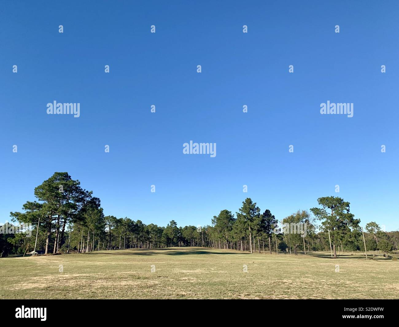 The fairway of a golf course surrounded with trees with clear blue sky in a horizontal image format. - Stock Image