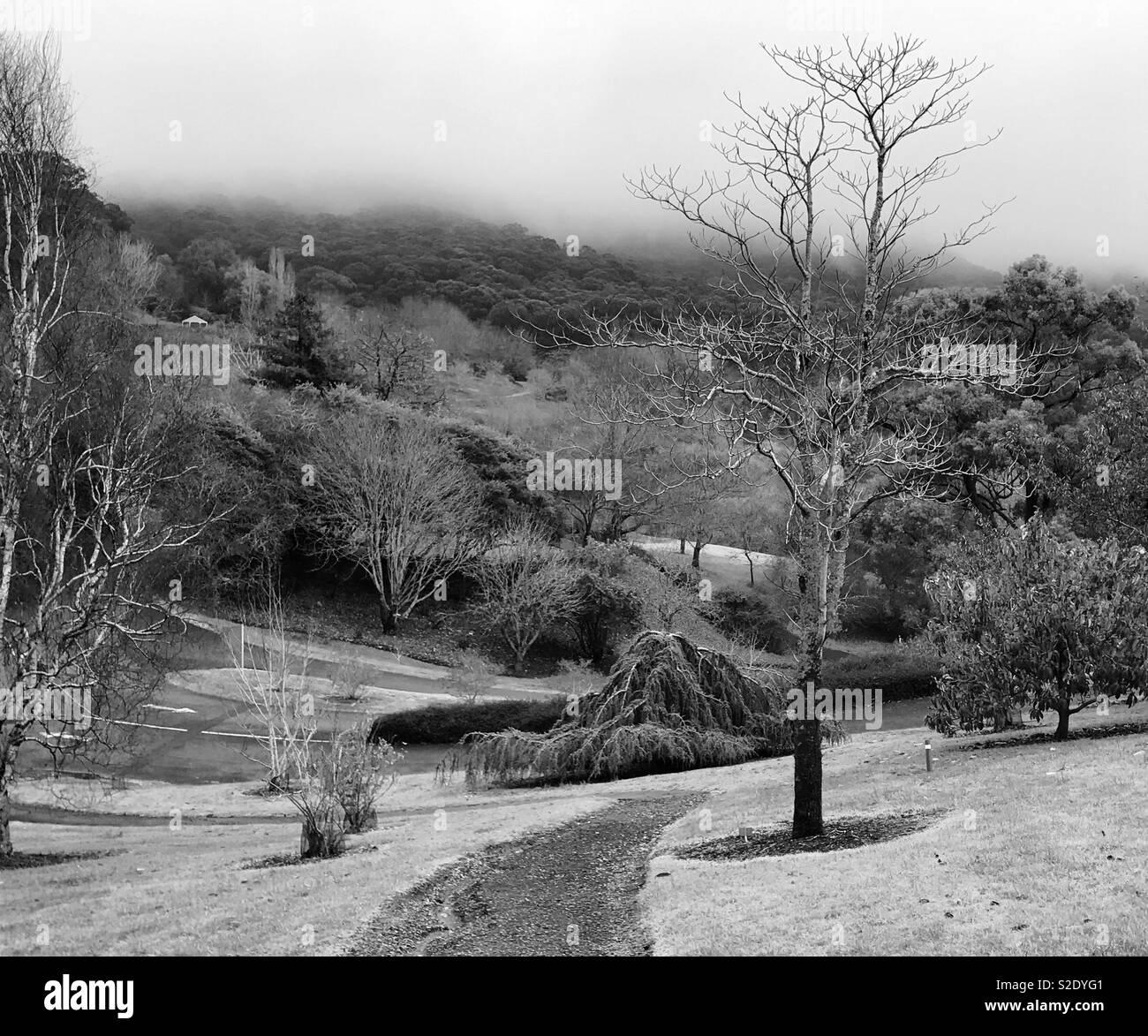 Mount lofty botanical gardens 💕 xx - Stock Image