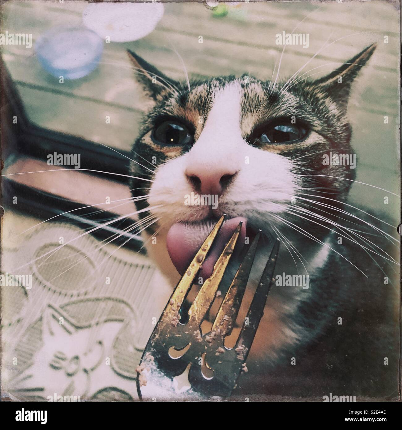 Tabby & white family cat licking his fork clean - Stock Image