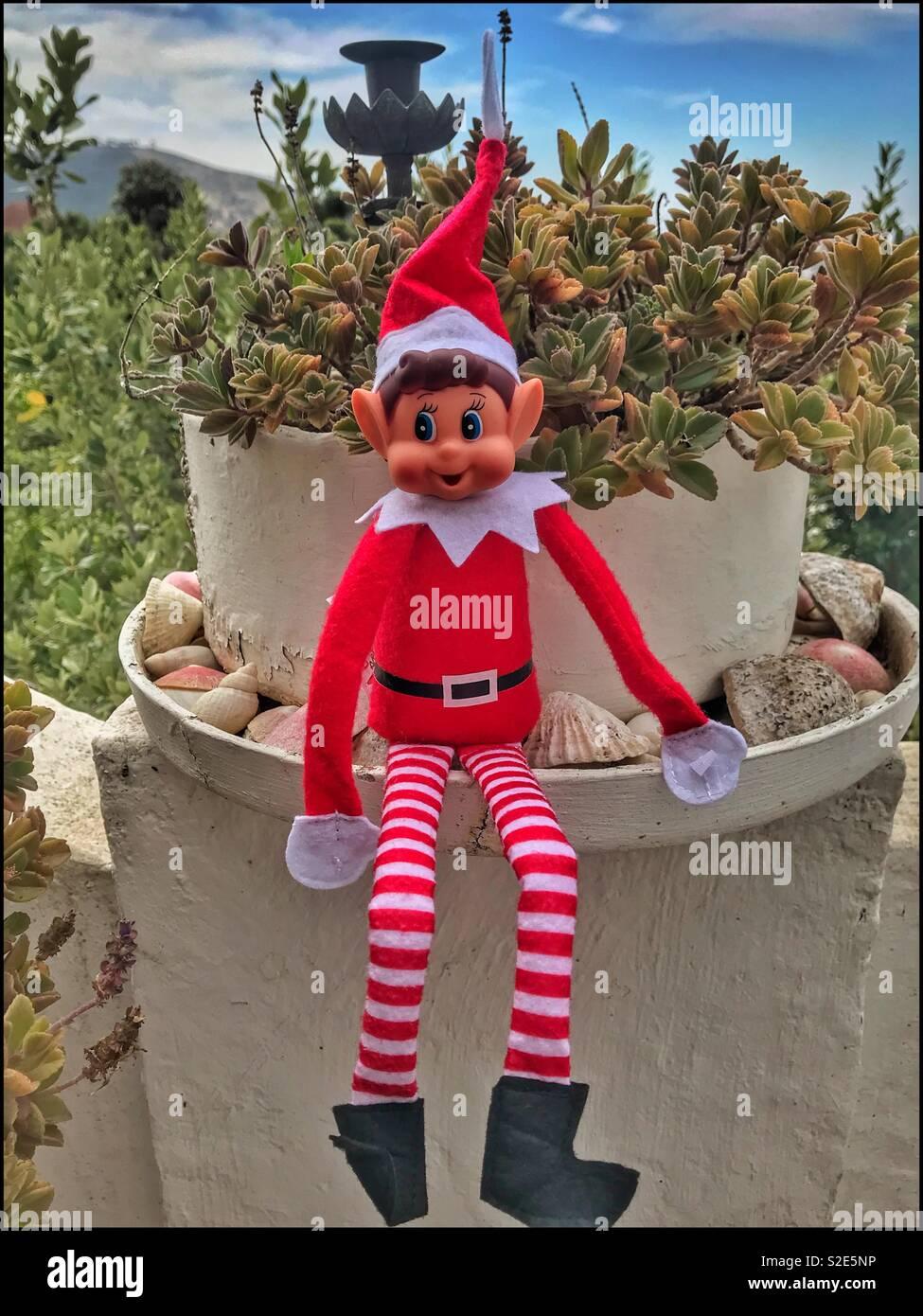 Naughty elf sitting on a pot plant. Stock Photo