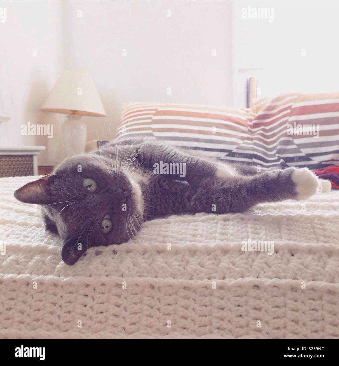 Best cat ever, Cute cat, gray cat, cozy, pampered pet, pets - Stock Image