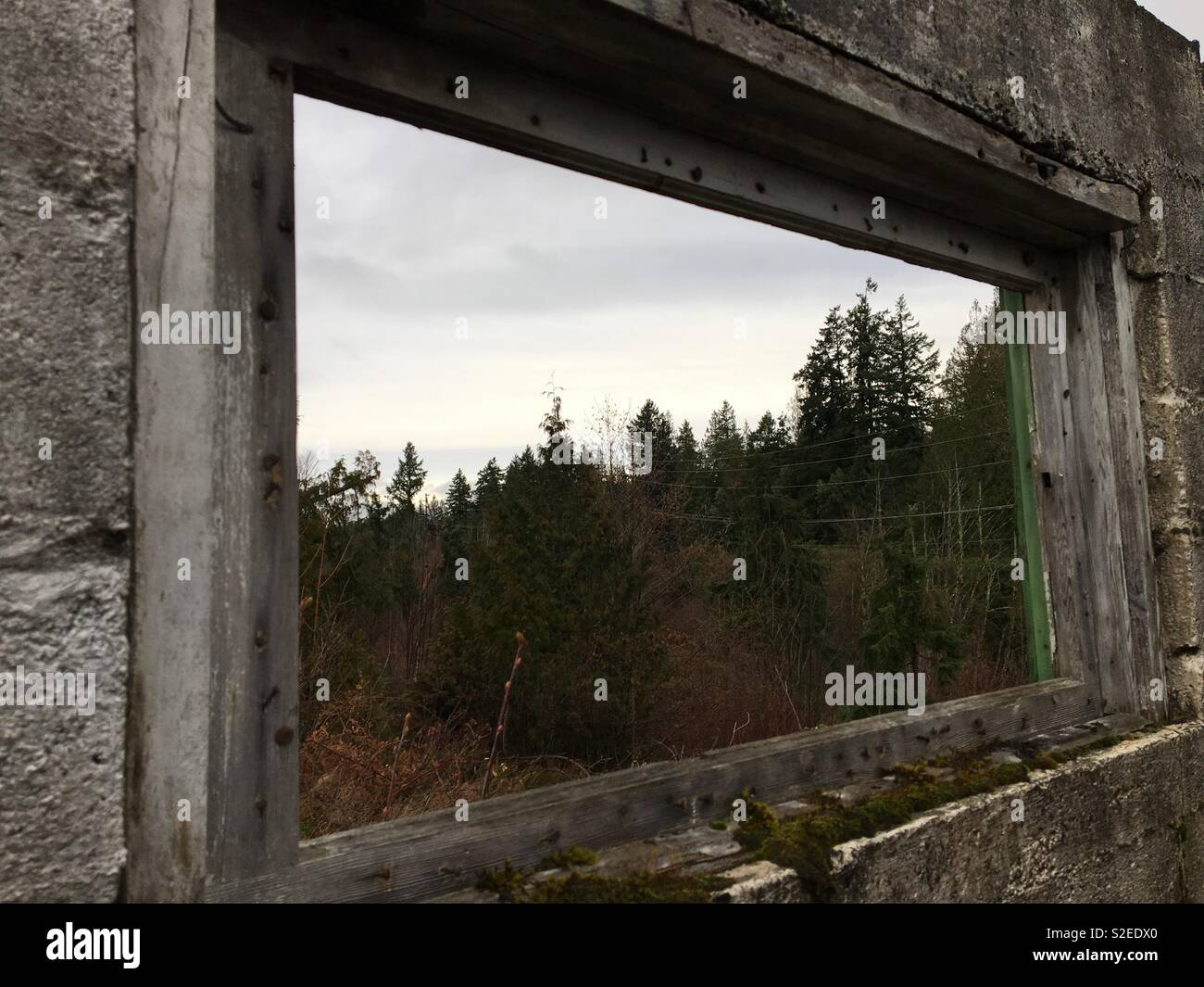 Brick ruins facing out a wood framed window towards a forest - Stock Image