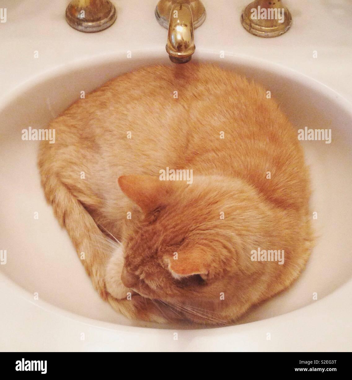 Cat in sink, Funny cat, Orange cat, Tabby, Orange tabby cat - Stock Image
