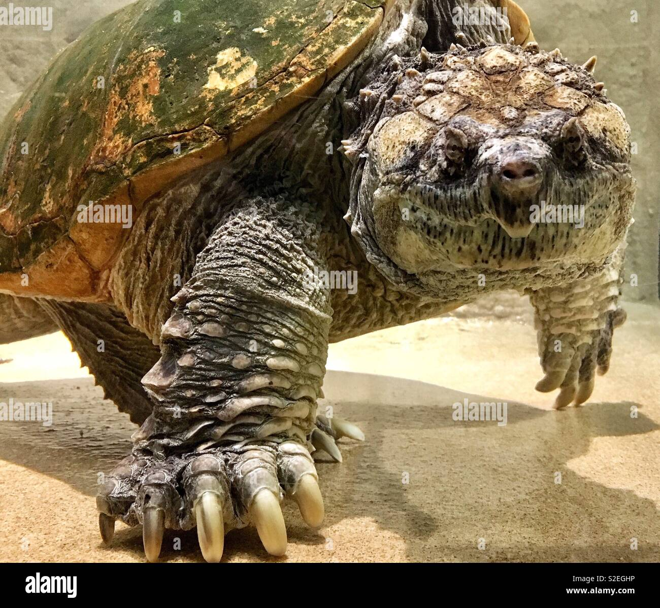 Angry Turtle Stock Photos & Angry Turtle Stock Images - Alamy