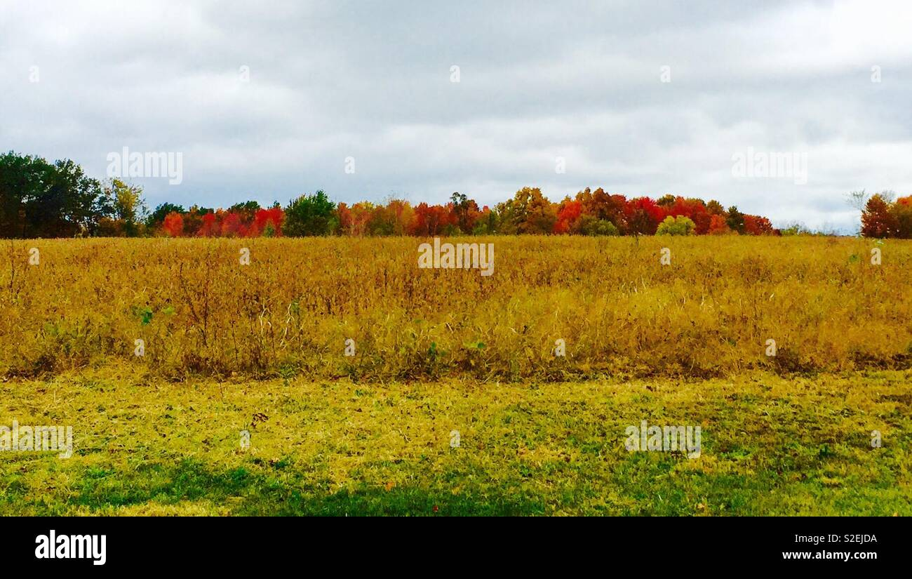 Hayfield with fall colors - Stock Image