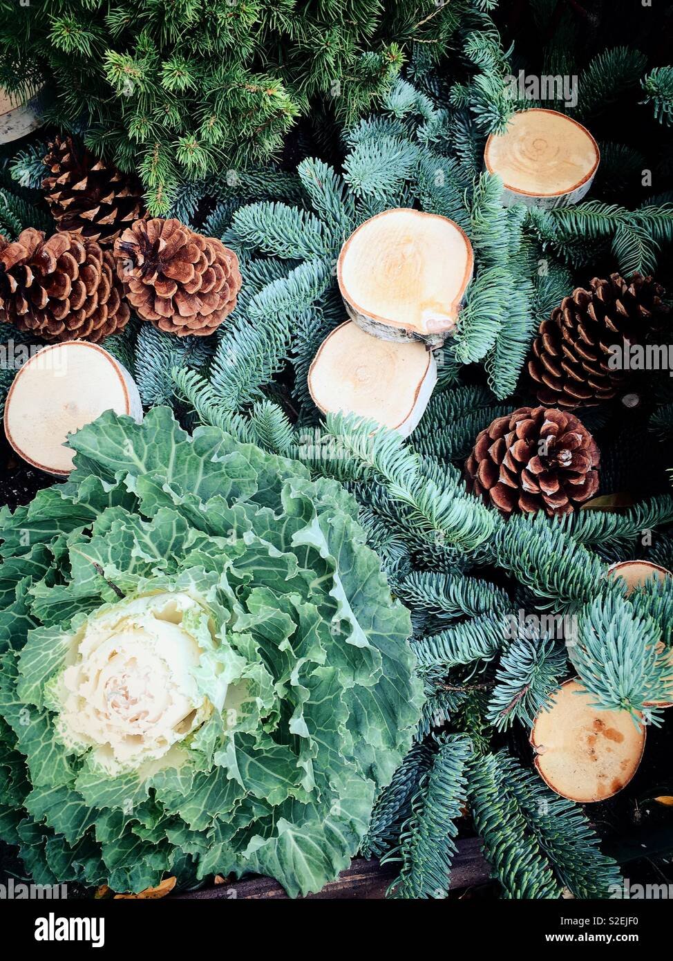 Holiday Display pinecones evergreens and wood circles, United States - Stock Image