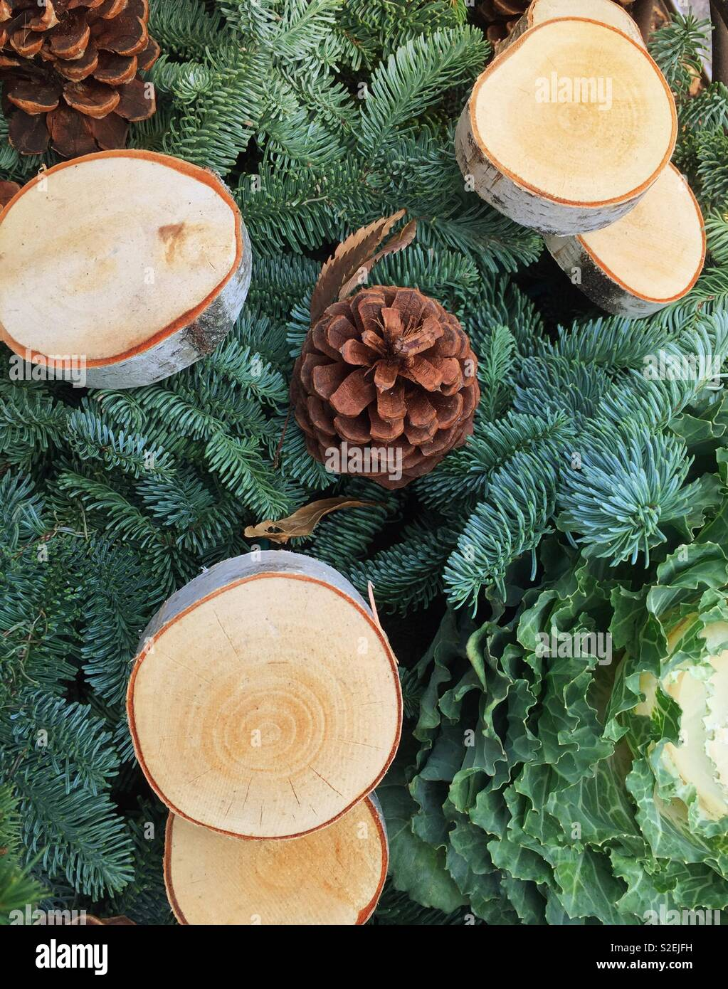 Holiday Display of birch tree slices pinecones and evergreens, United States - Stock Image