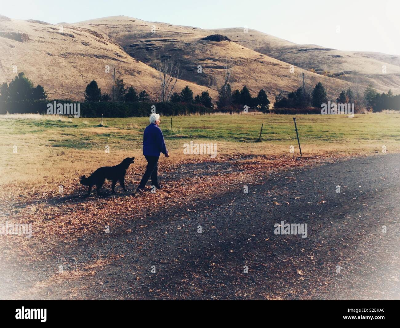Dog follows middle aged woman walking near hills in eastern Washington - Stock Image
