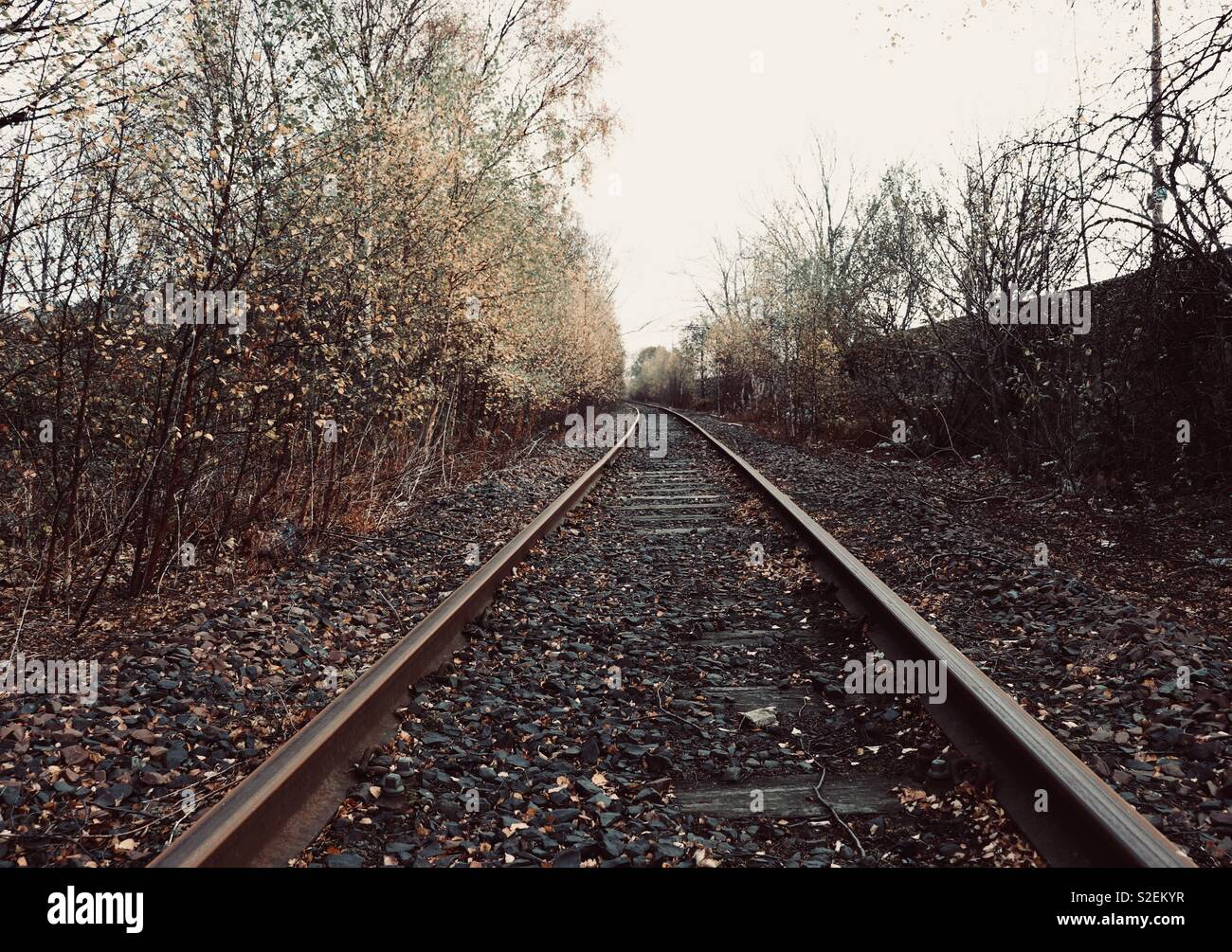 Abstract view of railway tracks with winter trees shedding leaves - Stock Image