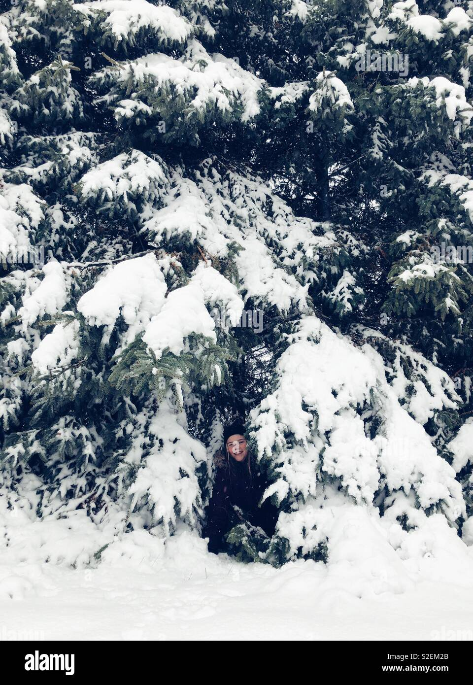 Girl playing in tall evergreen trees in the snow - Stock Image