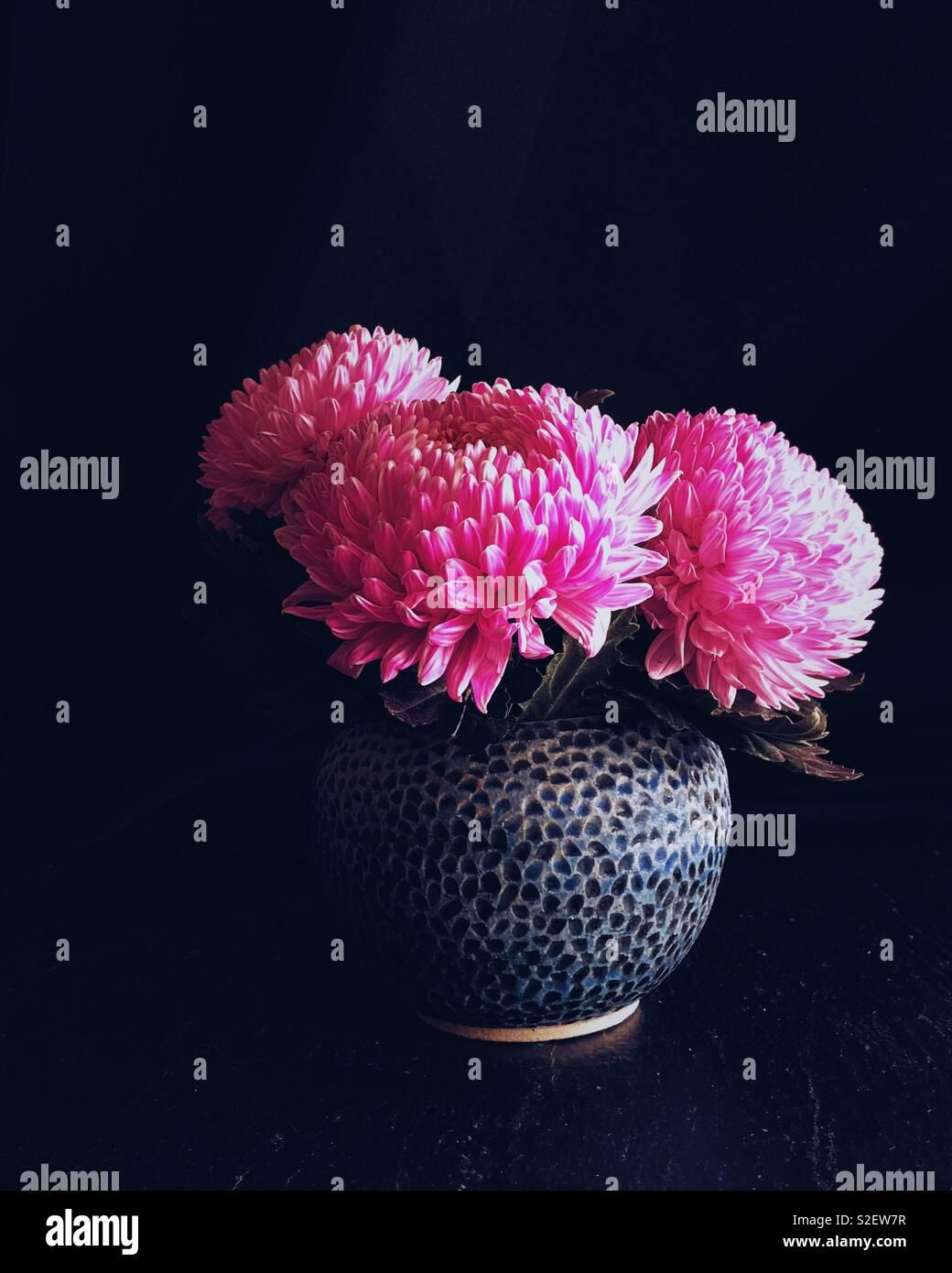 Pink Chrysanthemums - Stock Image