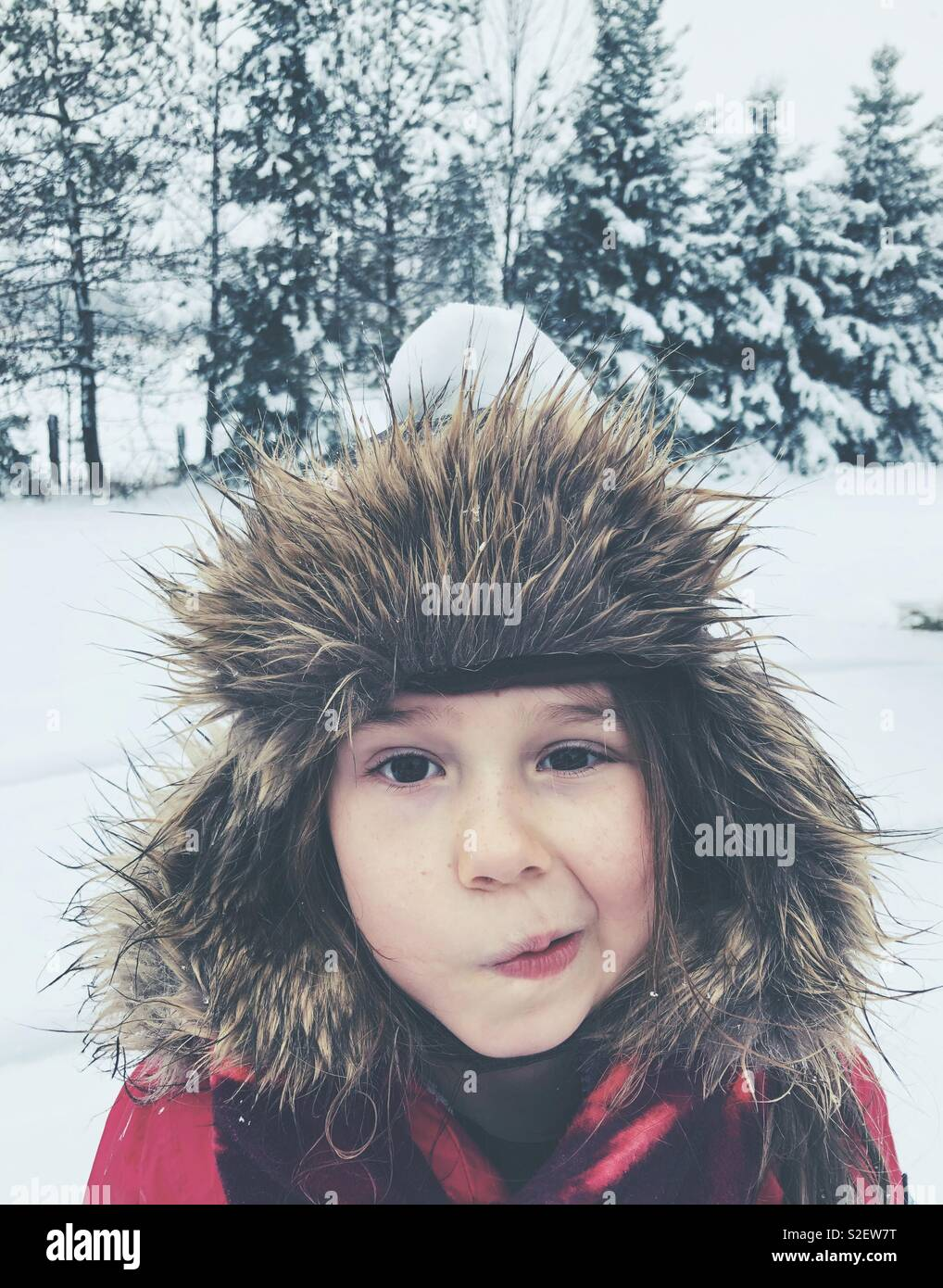 6 year old girl wearing furry trapper hat outside in the snow with snowball on head and funny expression - Stock Image