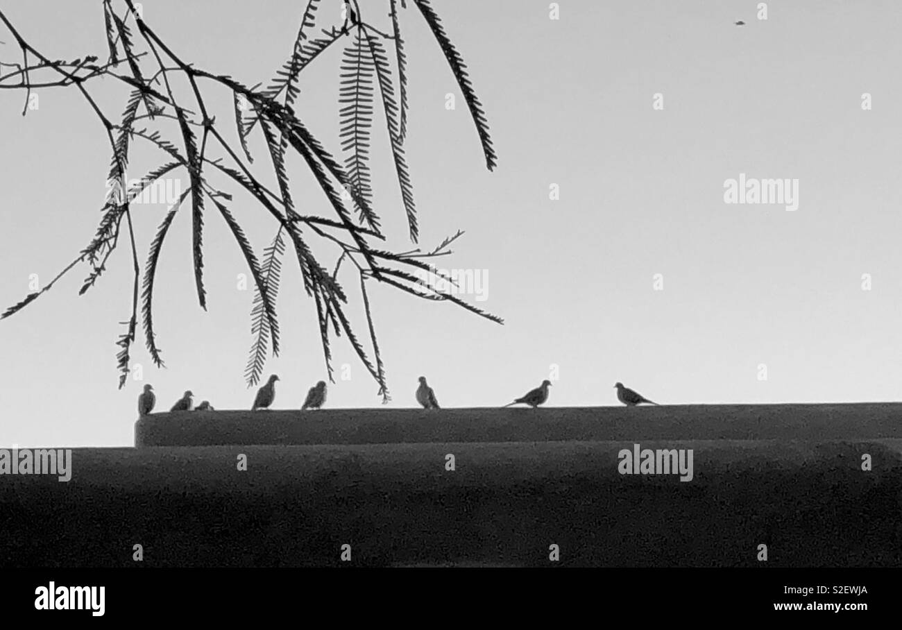 Birds of a Feather - Stock Image