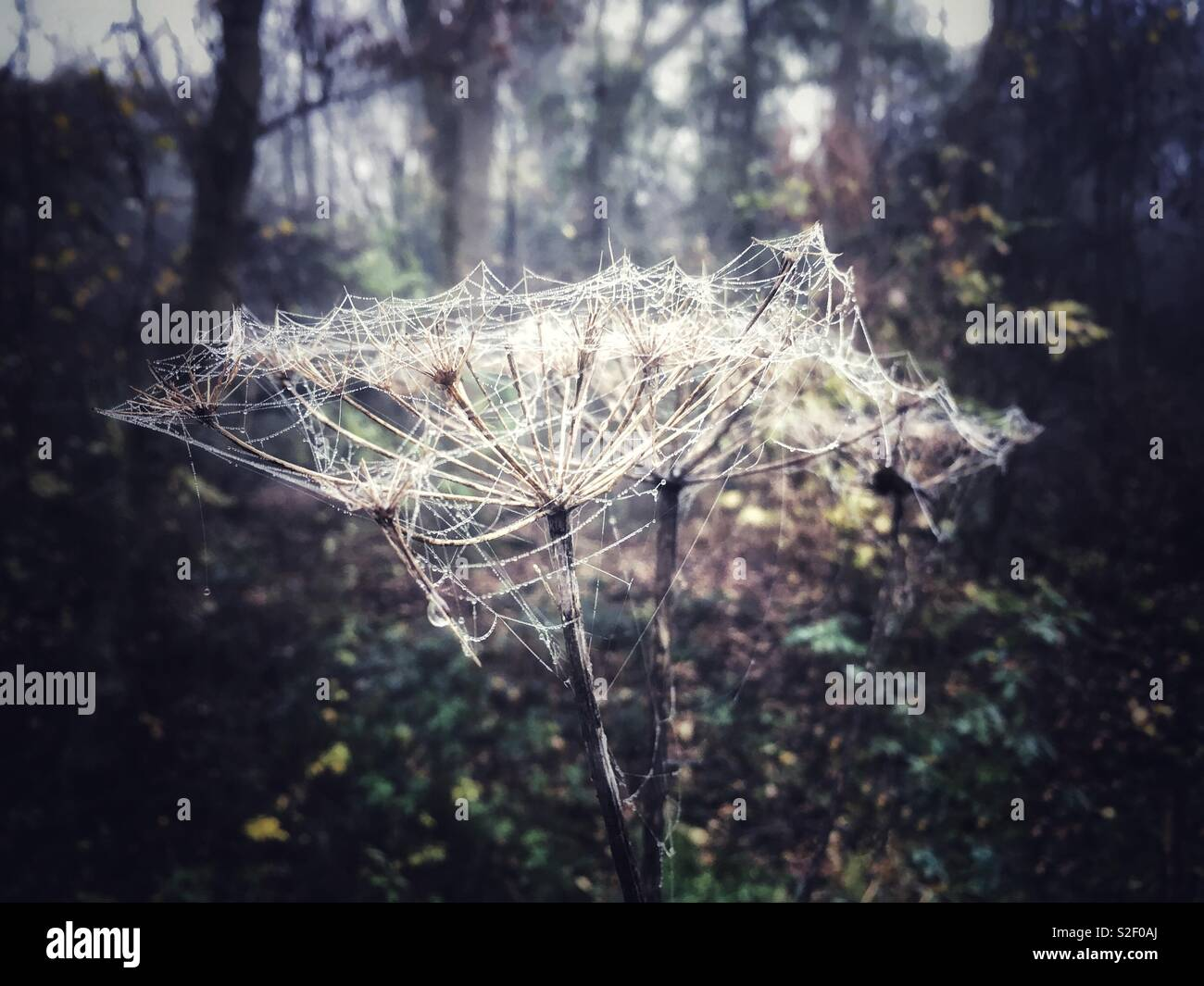 Spider's webs on seed heads. - Stock Image