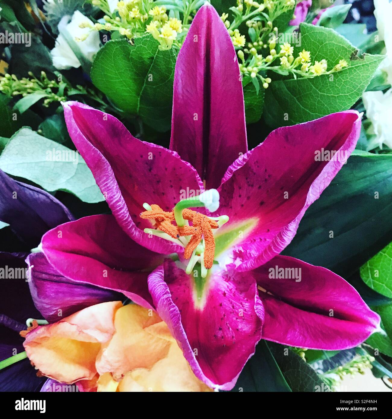 Purple lily in a flower bouquet. - Stock Image