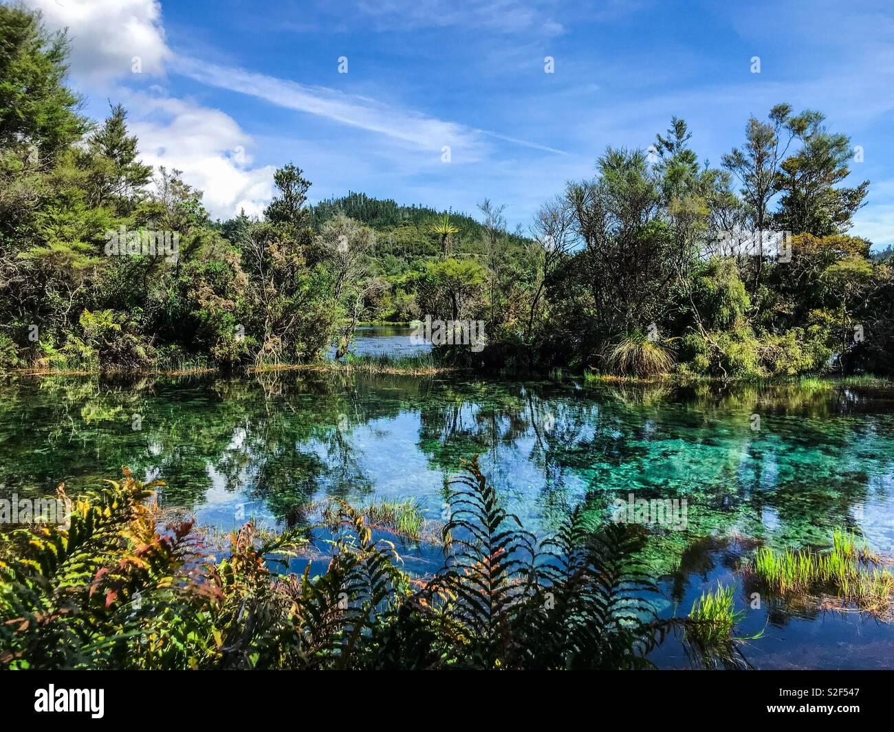 Te Waikoropupū Springs - Stock Image