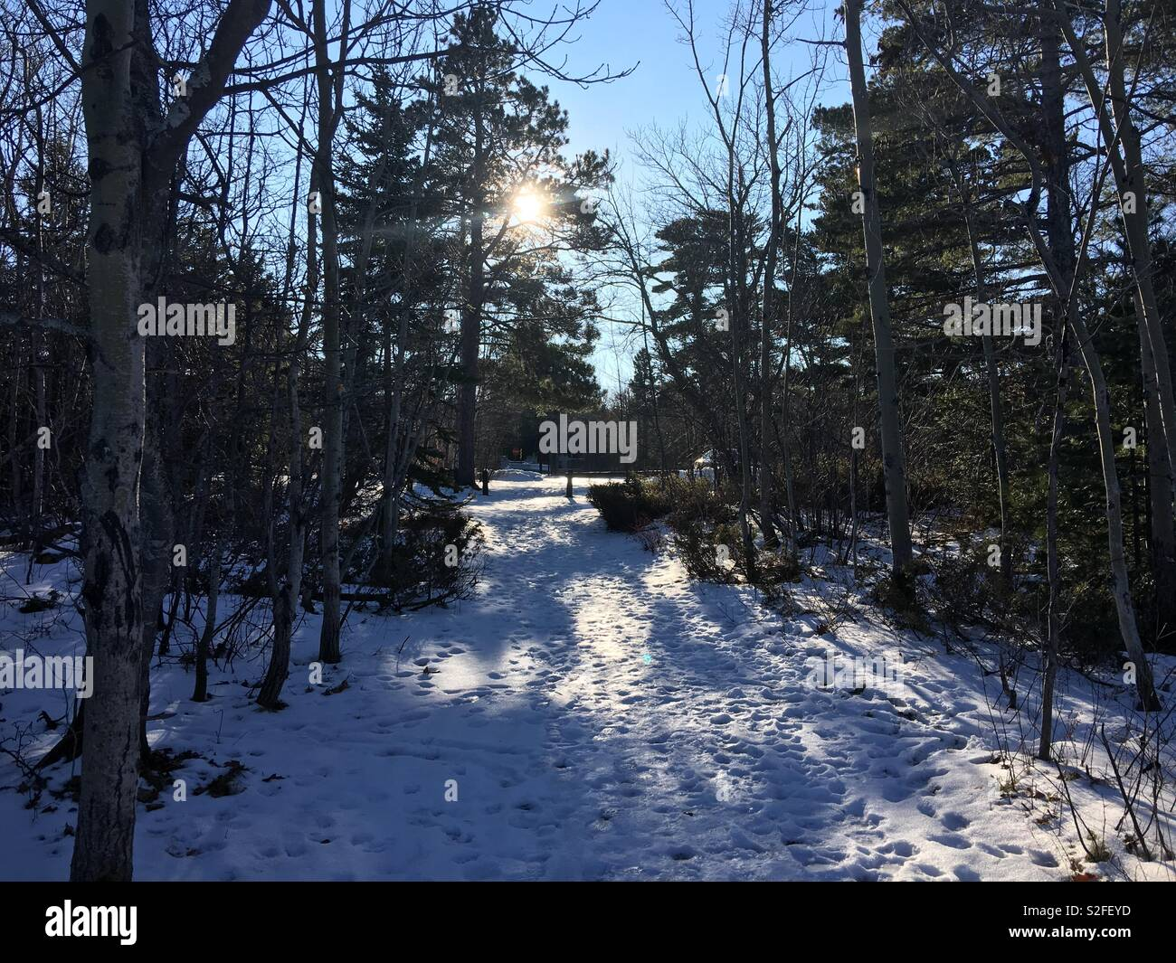 Low winter sun through bare trees and conifers backlights footprints in snow - Stock Image