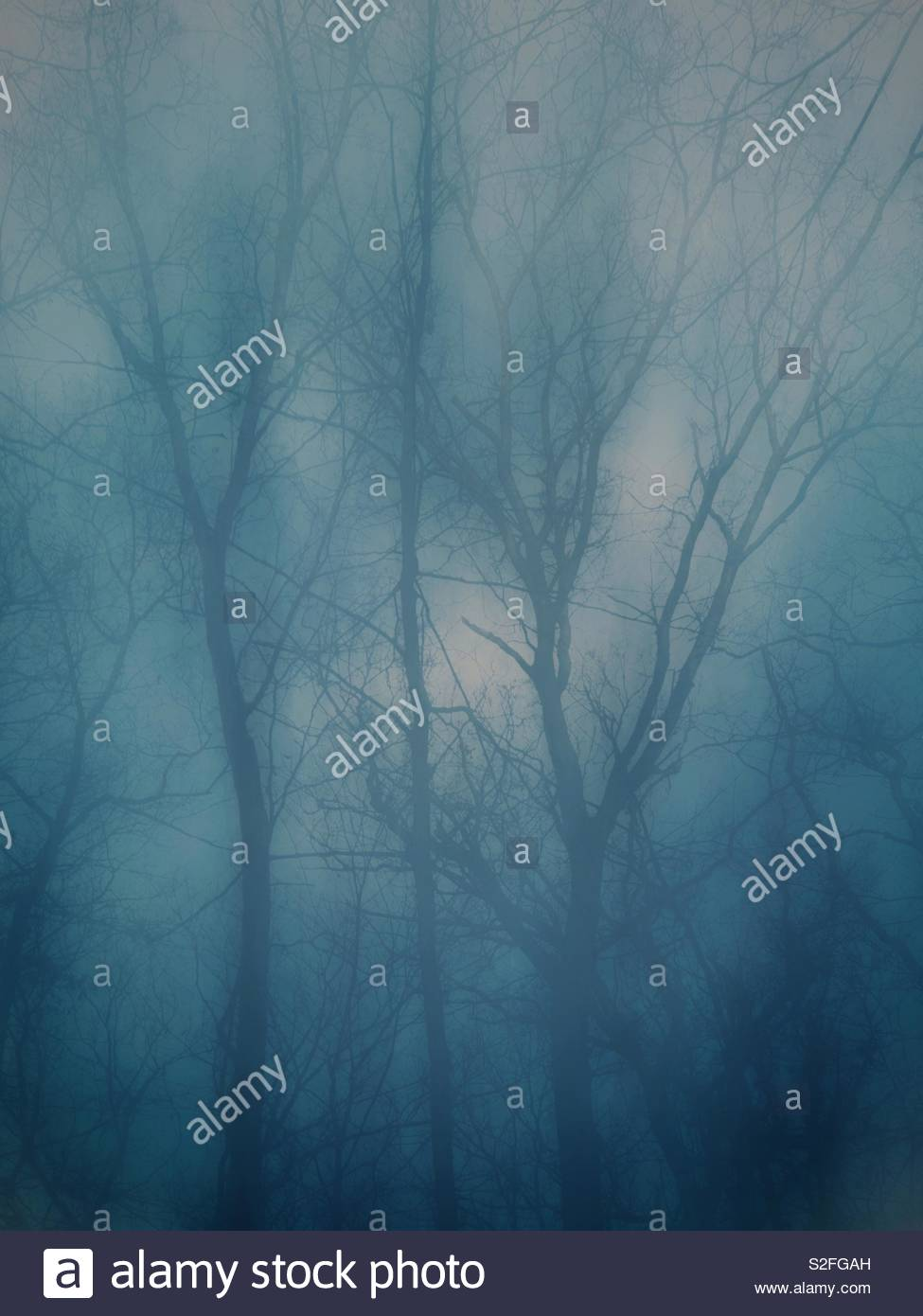 Foggy forest on a winter day - Stock Image