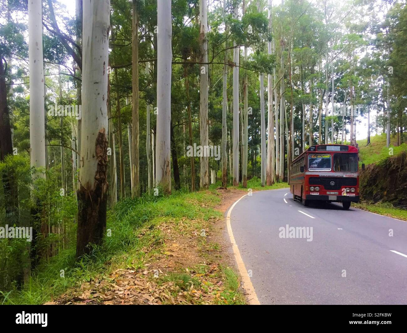Bus traveling to wild road Srilanka Diyathalawa - Stock Image