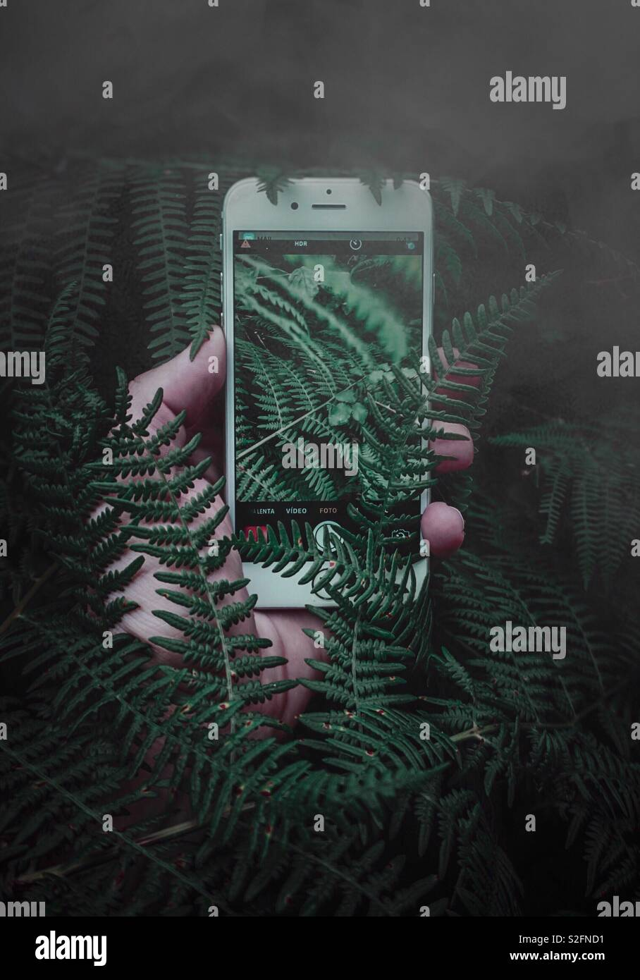 hand with phone in the ferns - Stock Image