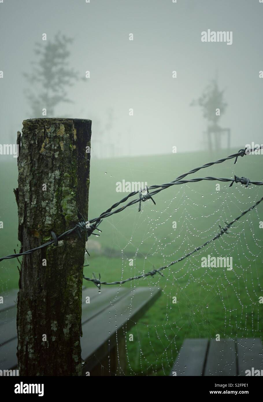 spider web in the barbwd wire fence - Stock Image