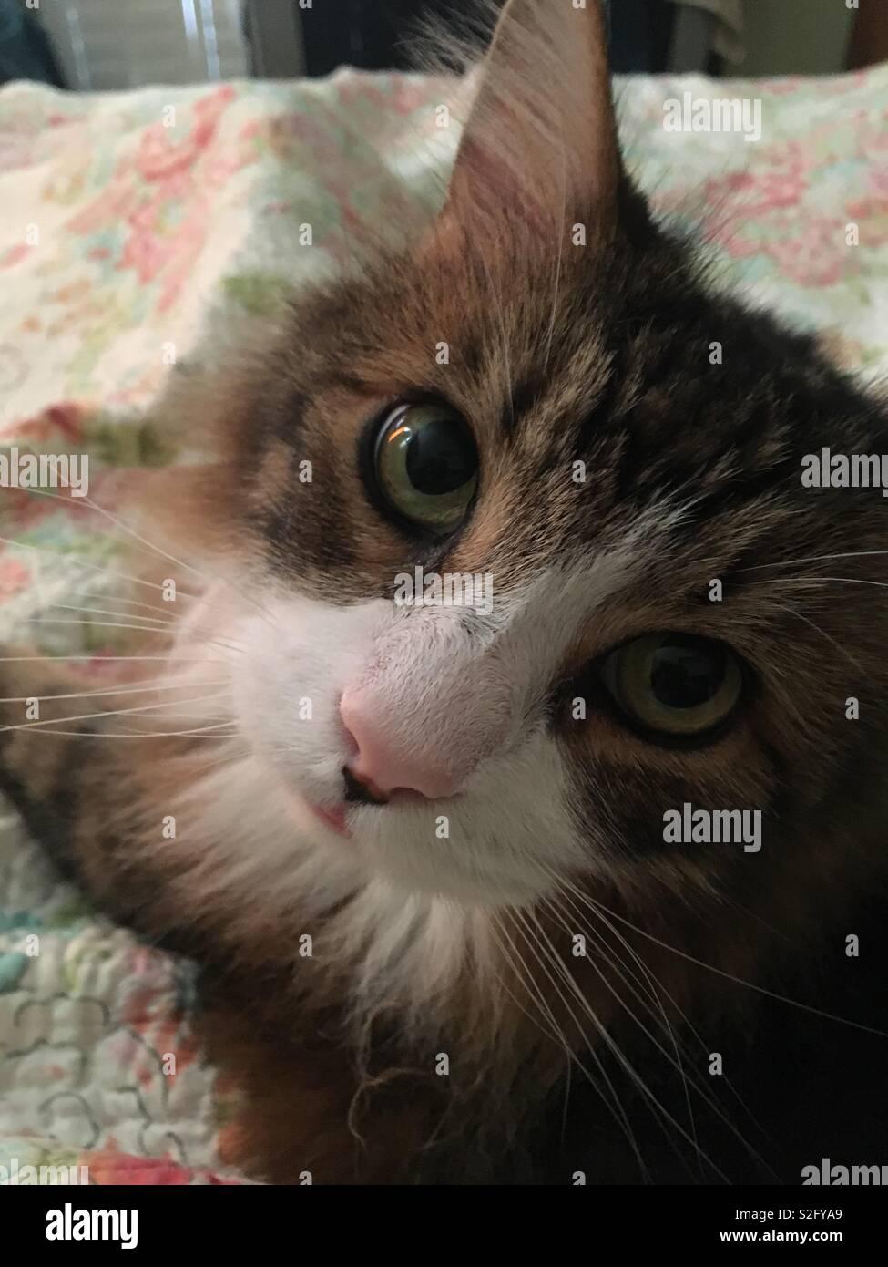 Fluffy cat - Stock Image