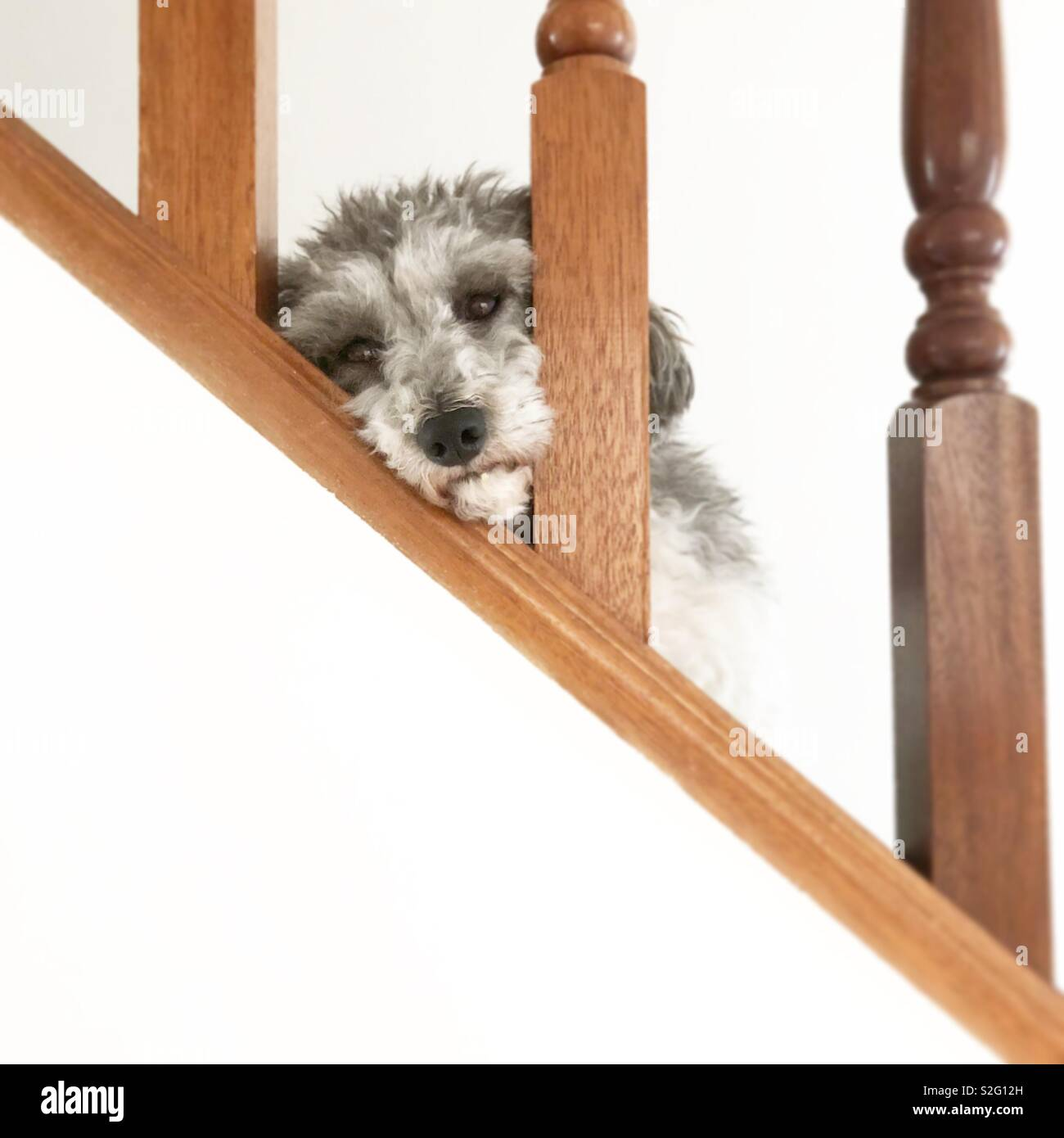 Day dreaming dog - Stock Image