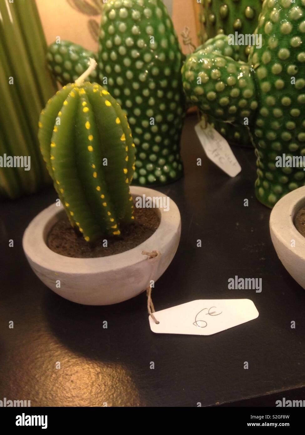 🌵 cactus - Stock Image