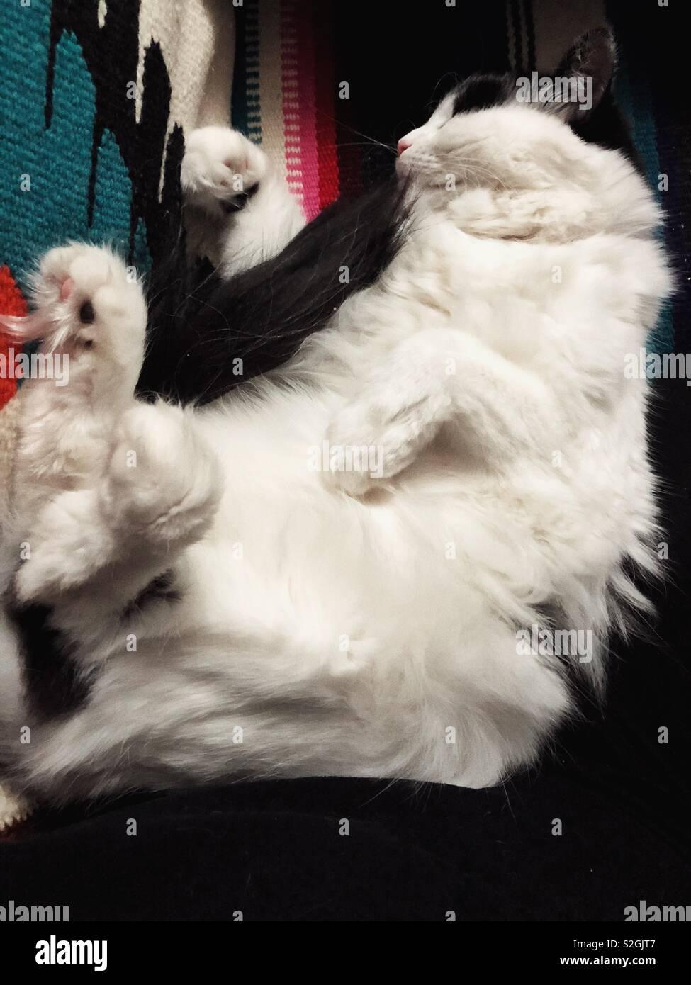 Cat White Animal Meme Confused Looks Wwwtollebildcom