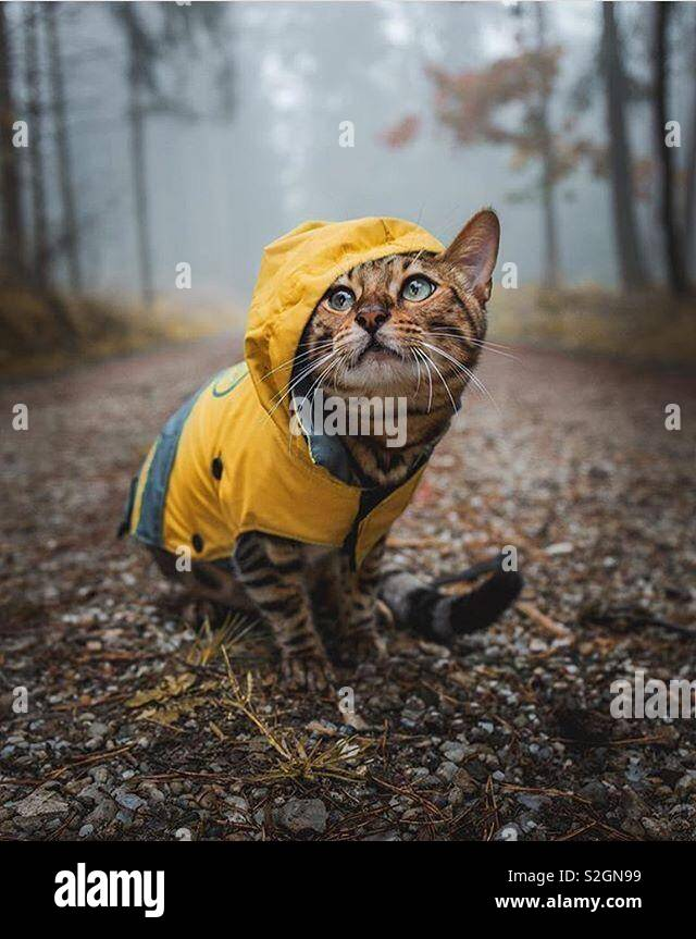 Dressed up kitty - Stock Image