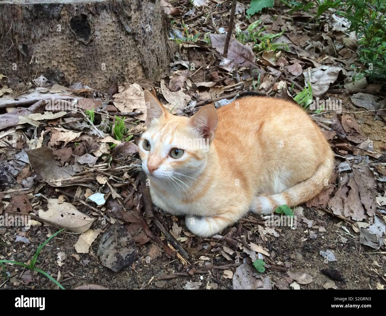 Cat aim - Stock Image