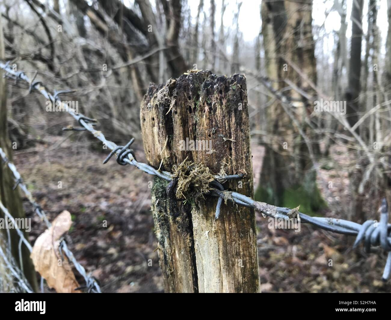 Old fence post with barbed wire - Stock Image