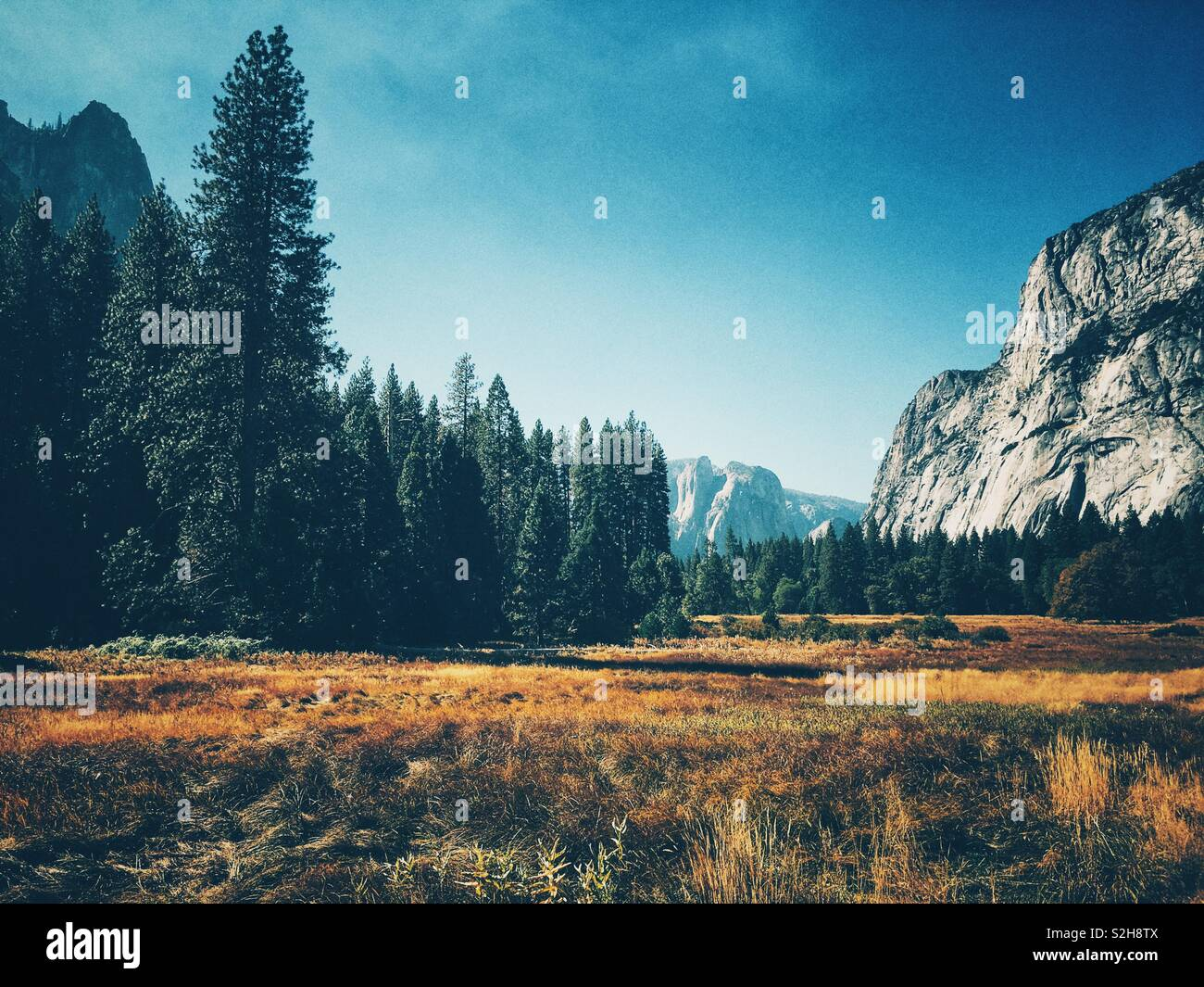 View across Yosemite Valley floor - Stock Image