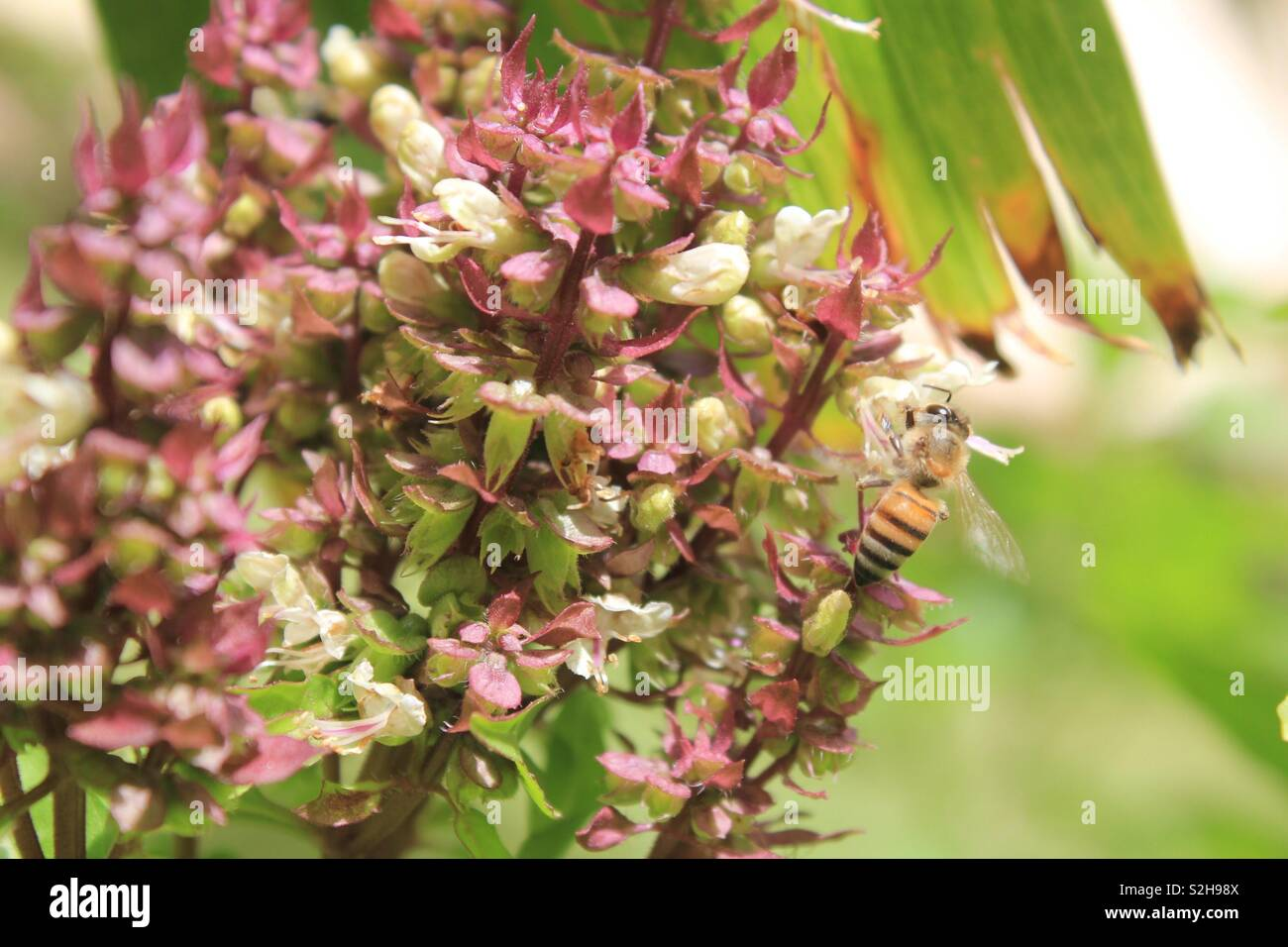 The bee stuck on flowers Stock Photo