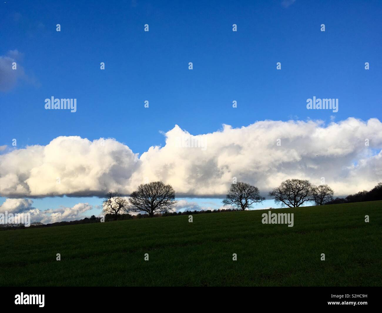 Nature abhors a straight line, said garden designer, William Kent. Mmmm. White, fluffy clouds, form a straight line, in a blue sky, above a green hill, and the silhouette of trees - Stock Image
