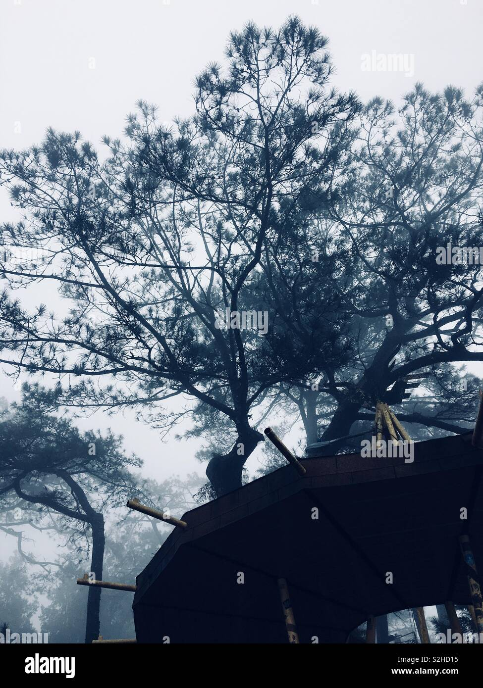 Took on a foggy afternoon in Baguio City, Philippines. - Stock Image